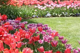 thanksgiving point tulip festival 2014 valley gardens