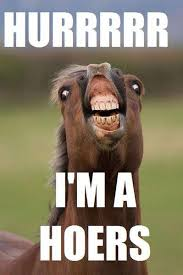 Gay Horse Meme - my sister raises horses this is the picture she uploaded on
