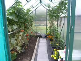 winter gardenz greenhouses and glasshouses