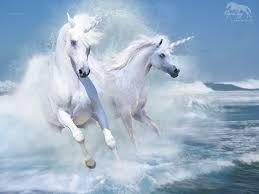 free sea horses wallpaper download the free sea horses wallpaper