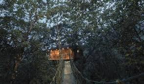 Coolest Treehouses Best Tree House Resort In Wayanad Kerala India