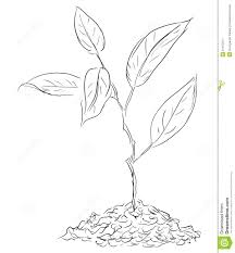 Drawn Plant Seed Sprout Pencil And In Color Drawn Plant Seed Sprout Sprout Coloring Pages