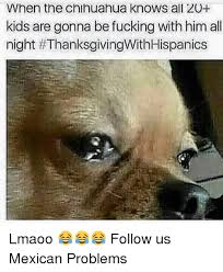 Meme Chihuahua - when the chihuahua knows all 20 kids are gonna be fucking with