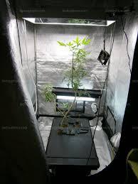chambre de sechage cannabis luxe chambre cannabis ravizh com