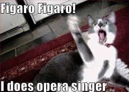 Opera Meme - viral video man goes berserk in library