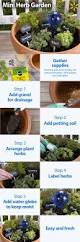 best 25 spice garden ideas on pinterest