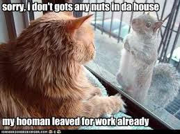 Squirrel Nuts Meme - lolcats squirrel page 2 lol at funny cat memes funny cat