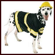 Halloween Costumes Large Dogs Dog Halloween Costumes Large Dogs