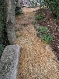 scottish rock garden club u003ebulb log