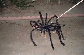 Dog Spider Halloween Costume Dog Costume Picture Detailed Picture Funniest