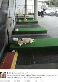 ikea parking lot ikea designs dog parking bays so customers can leave pets outside