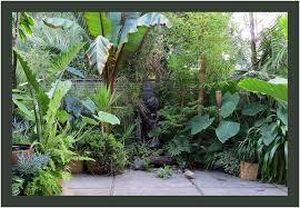 backyards excellent banana plant care tropical garden in