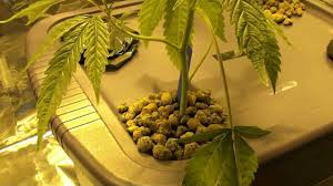 the 420foo u0027s 400w hps dwc hydroponics closet grow room setup youtube