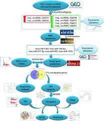A circRNA–miRNA–mRNA network identification for exploring underlying