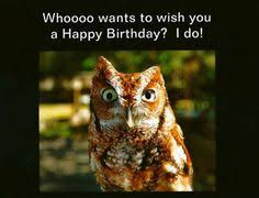 Happy Birthday Owl Meme - owl happy birthday invite and ecard design happy birthday to