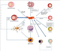 mesenchymal stem cells immunology and therapeutic benefits