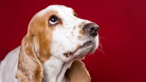 types of dogs archives posts on various common types of dog cancer