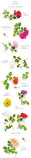 Color Meanings Chart by Rose Colours U0026 Their Meaningsthe Rose Cafe U2013 Flower Delivery Cape Town