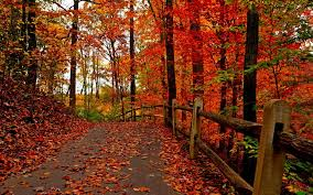 cute baby boy autumn leaves wallpapers 30 autumn forest wallpaper pictures