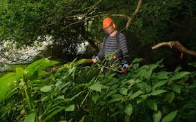 plants native to uk himalayan balsam now so widespread it needs tackling