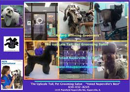 voted naperville u0027s best pet grooming salon the upscale tail