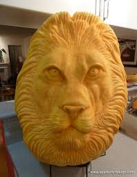 african lion pumpkin carving by clive cooper carved from 80lb