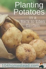 Garden Of Eden Craft - the theory behind back to eden gardening