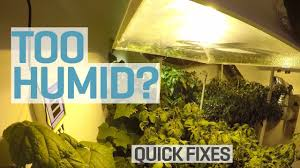 too humid in your grow room youtube