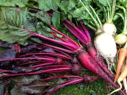 five tips for growing beets