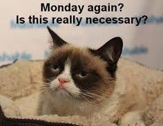 Grumpy Cat Monday Meme - grumpy cat funny posts pinterest grumpy cat cat and grumpy