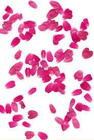 Rose Petals Rose Petals Transparent Background Png Mart