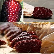 ornamental corn seeds promotion shop for promotional ornamental