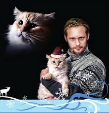 Sweater Meme - the best winter santa cat and sweater profile photo meme frontier