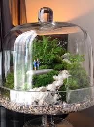 1097 best terrariums images on pinterest terrarium ideas