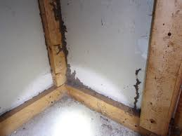 termite inspection report sample termite inspection termite shelter tubes