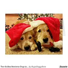 two golden retriever dogs in santa hats christmas card by