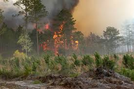 Wildfire History by Bugaboo Scrub Fire Wikipedia