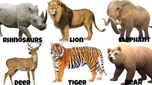 wild animals images Wild animals with names jpg
