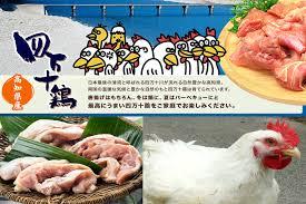 d馗o cuisine boutique 高知縣美食 半烤鰹魚 皿鉢料理 四萬十雞肉 高知縣民一致推薦10大必