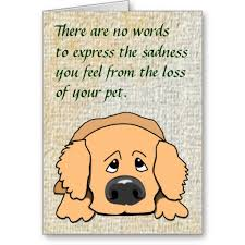sympathy for loss of dog 2b scale image shown of sad dog pet sympathy card