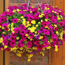 Patio Plants For Sun Best Plants For Hanging Baskets Partial Sun Pink And Peach Flowers
