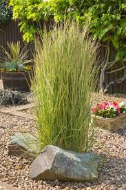 ornamental grass landscape ideas lovetoknow