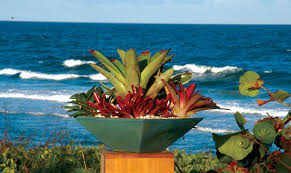 container gardens in the palm beach county landscape pamela crawford