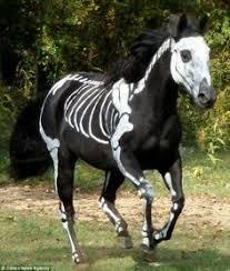 Halloween Costumes Horse Horse Halloween Costume Horse Costumes Horse