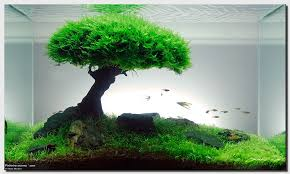 japanese aquascape redbonsai treescape is the latest masterpiece from filipe oliveira