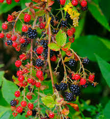 native nc plants quick read native flowers and vines welcome wildlife
