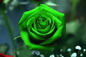 Color Green Navratri Special