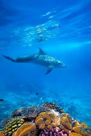 623 best underwater world images on pinterest animals ocean