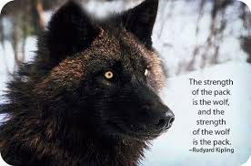 ⱳolf deeply emotional and wholly the wolf is the