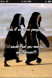 Cute Penguin Meme - cute penguin meme the best penguin of 2018
